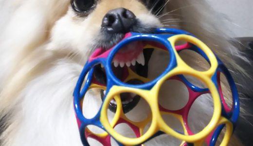 オーボールは犬の遊び道具にも最適!長年遊んでくれてありがとう