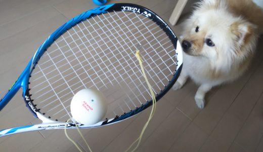 入部シーズン到来!軟式テニス用ラケット、自主練グッズ購入♪