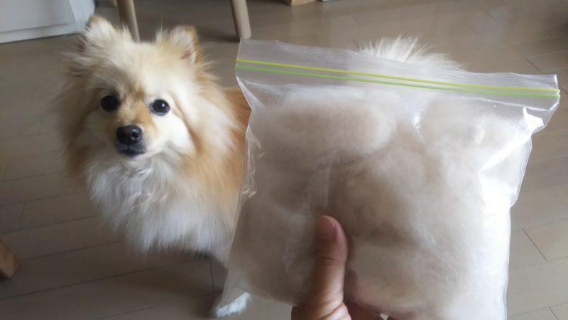 ポメラニアンの抜けた毛を袋いっぱいにためてみました。