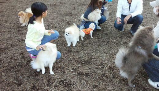 犬を飼いたい!費用を抑える方法と、犬種選びにこだわりたいポイント