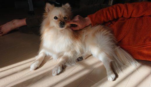 犬のしつけは必須!しつけをしない飼い主は最悪なペットライフになる