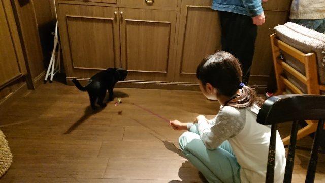 猫じゃらしで遊ぼうよ。
