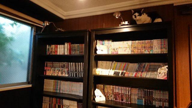 猫カフェきゃらふの店内には、本もぎっしり。