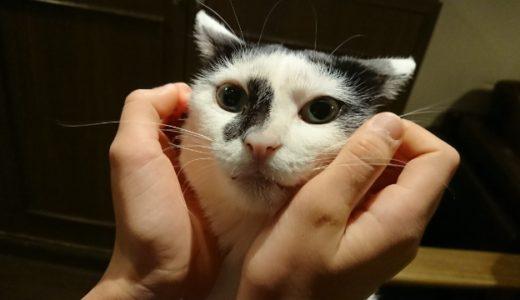 浅草観光の休憩にもおすすめ!【猫カフェきゃらふ】は清潔&ランチも美味しい♪